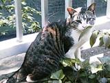20050523cat
