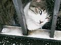 20050617cat1