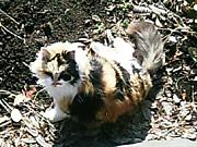 20060128cat1