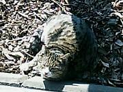 20060128cat2