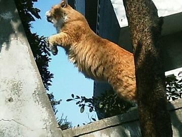20060203cat_jump