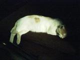 20070905cat1