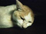 20070905cat2