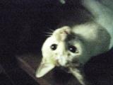 20070905cat3