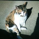 20071204cat