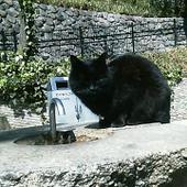 20070314cat1