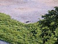 20070523cat