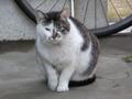 20080503cat