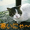 pic_0133.jpg
