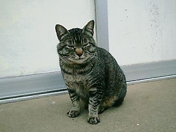 20060410cat