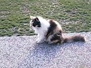 20060430cat2