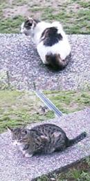 20060502cat