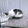 20060526cat2