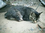 20060722cat1