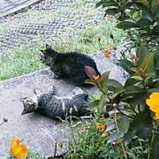 20060921cat2