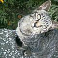 20060925cat2