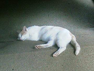 20070809cat