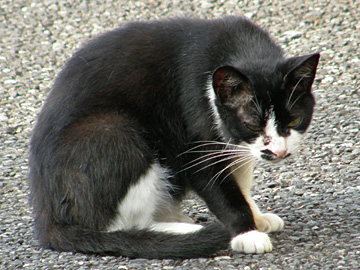 20070816cat