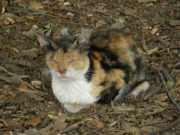 20070827cat