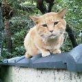 塀の上のネコ@椿山荘