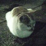 20070521cat1