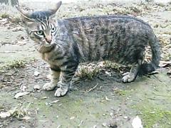 20070601cat