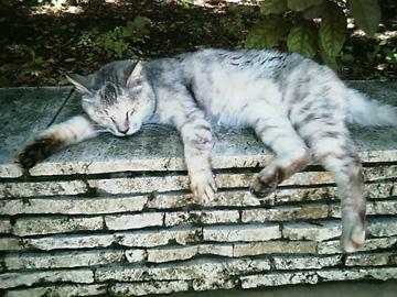 20070615cat