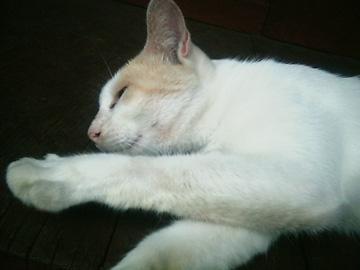 20070725cat2