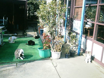 20080311cat1