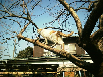 20080311cat2