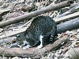 20080312cat