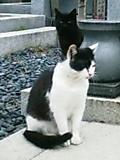 20080319cat