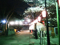 20080401hanami