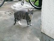 20080406cat
