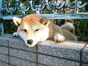 20080406dog
