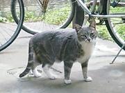 20080423cat