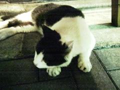 20080811cat