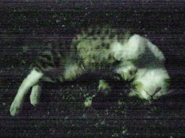 20080901cat
