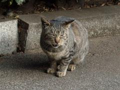 20090119cat