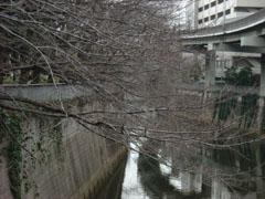 20090309sakura