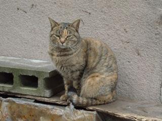20090324cat