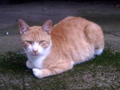 20090713cat