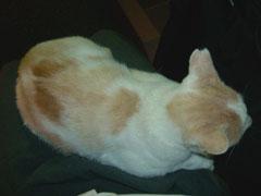 20090901cat