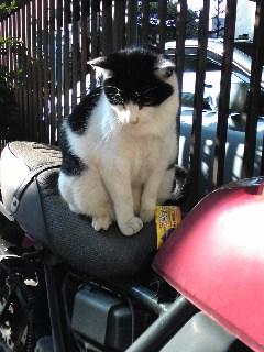 久々にバイク猫