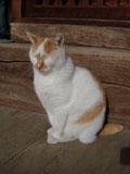 20091105cat