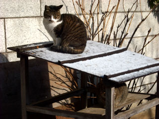 201002gcat1