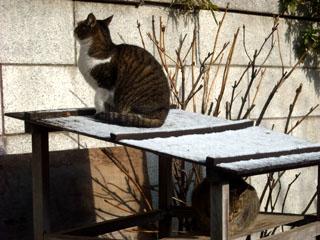 201002gcat2