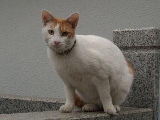 20100210cat2