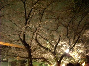 20100406yozakura