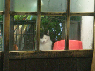 Cat_sumire